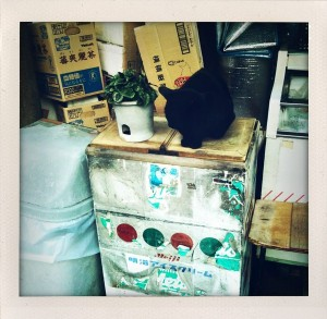 ShakeItPhotoで撮ってみたその1*野良猫?